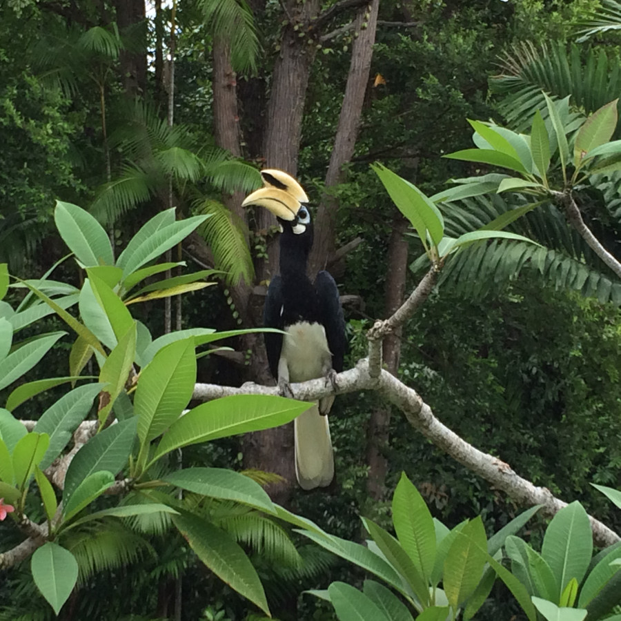 Wildlife in Malaysia rainforest